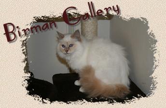 Birman Gallery