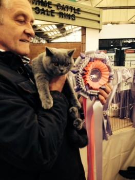 British blue shorthair cat club