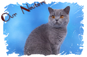 British Shorthair Neuters