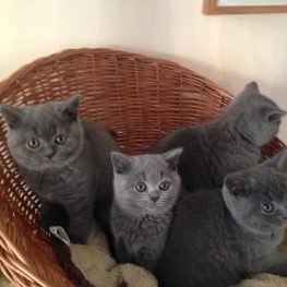 Kittens in Basket 3