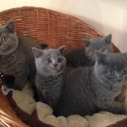 Basket O Kittens