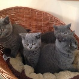 Basket O Kittens 2